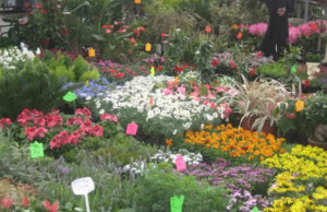 sajam-cvijece