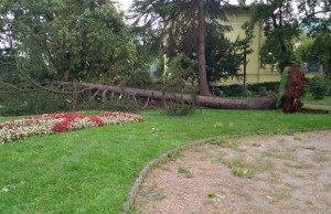 Bolnica-Lovran-stablo2