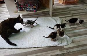 kitten-house